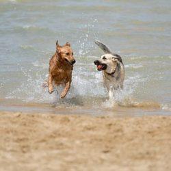 dog-1411397__340