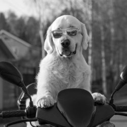 dog-2537902_960_720