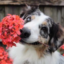 flowers-1845074_960_720
